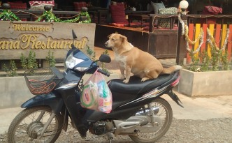 Just a dog on a bike, move along, nothing to see here